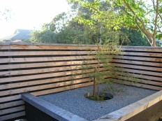 """Raised raked gravel garden"" with timber slatted screen provides for a sheltered morning nook. Podocarpus totara / totara rises up through galvanised steel ring."
