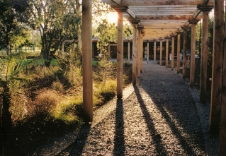 (Designed while working for Lucas Associates). Natural, raw materials. Macrocarpa timber, exposed aggregate concrete borders, curved gravel path, local native plants provides for intrigue and a clear connection from arrival to wine shop.